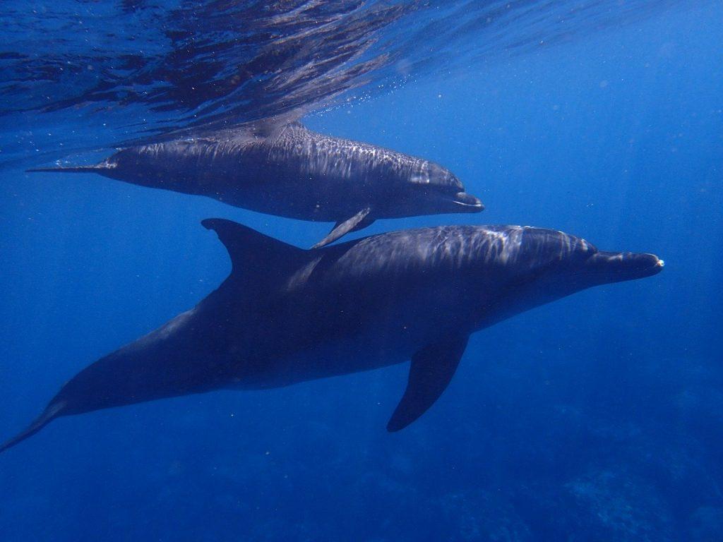 Suomen Delfins on tukijärjestö lapsena seksuaalista hyväksikäyttöä kokeneille.